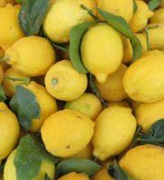 citron en Provence Galinettas